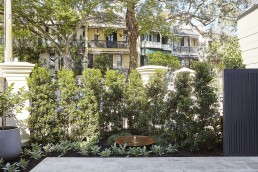 Paddington Landscape Architect