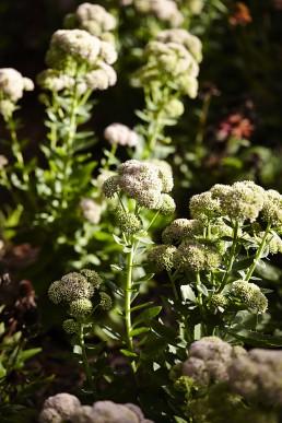 Roseville Garden Design